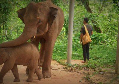 TONG BAI FOUNDATION: Dieser Platz soll allen Elefanten des Tales Mae Win zugute kommen.