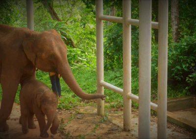 TONG BAI FOUNDATION: Wenn ein Elefant behandlungsbedürftig ist, kann der Besitzer ihn ohne Kosten in der Foundation unterbringen.